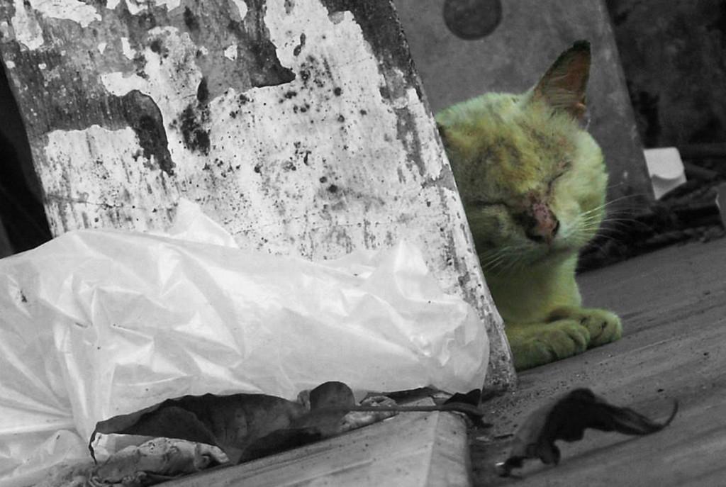 Setelah ditambahkan Selective Color. Lihatlah kucing ini terlihat kesepian.